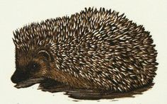 Silii (Hedgehog) - wood engraving - Mirka Hokkanen