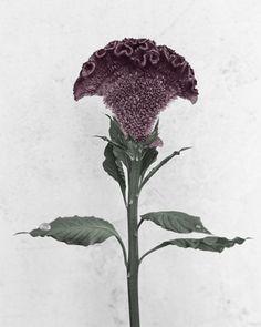bloom18