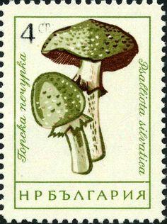 Znaczek: Small blood mushroom (Bułgaria) (Mushrooms (I)) Mi:BG 1264,Sn:BG 1184,Yt:BG 1100