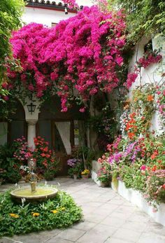 Bougainvillea tree in Spanish style entry Beautiful Flowers Garden, Beautiful Gardens, Trees Beautiful, Beautiful Gorgeous, Flowers Nature, Beautiful Things, Dream Garden, Home And Garden, The Secret Garden