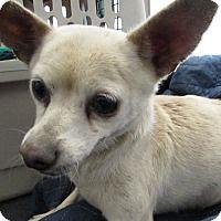 adopt a pet kennel 26 corona ca shelter corona animal