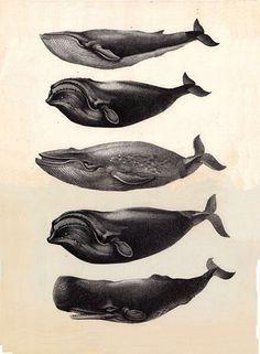 whale print - Google Search