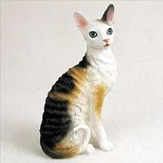 Cornish Rex | Cornish Rex Cat Breed country, pattern, coat, body type| Cat Breeds ...