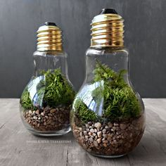 Light Bulb Plant Terrarium for Industrial Decorating - Love these little light bulb terrariums. I'd add some teeny tiny fairies or gnomes peeking out of the ferns! Light Bulb Jar, Light Bulb Plant, Light Bulb Terrarium, Garden Bulbs, Garden Terrarium, Planting Bulbs, Terrarium Wedding, Recycled Light Bulbs, Light Bulb Crafts