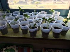 Pumpkin plants! My kids LOVED to watch their pumpkins grow :) I couldn't find pumpkin seeds in stores, so we did a pumpkin exploration to acquire them instead! The kids got to see and feel the inside of the pumpkin, and we washed and saved the seeds for planting. Planting anything is great for teaching about the life cycle of a plant - the kids really can see the different stages! Checkout my free pumpkin printable (math, science and ELA all-in-one)!