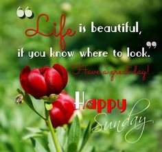 Latest 27 good morning sunday images, quotes, wishes in high quality. Happy Sunday Messages, Blessed Sunday Quotes, Blessed Sunday Morning, Happy Sunday Images, Good Morning Sunday Images, Sunday Morning Quotes, Sunday Wishes, Good Morning Inspirational Quotes, Morning Blessings