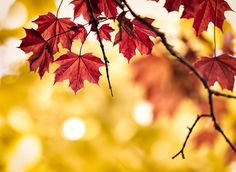Fall Watchlist – Miss Ashley's Anecdotes