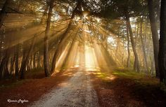 Photo of the week Photos Of The Week, Sunlight, Country Roads, Photography, Self, Photograph, Fotografie, Nikko, Photoshoot