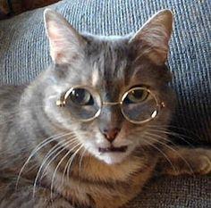 Grey Cat Wearing Glasses