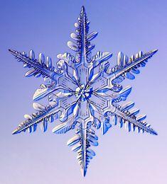 Copos de Nieve : Asombrosos.