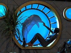 http://www.hawaiiislandrecovery.com/dolphin-assisted-psychotherapy/