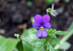 Resultado de imagem para flores naturais