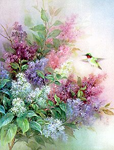 Lena Liu Prints For Sale | Hummingbird Lilac Lena Liu Floral art prints