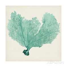 Sea Fan VI Art Print at AllPosters.com