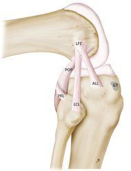 Knee ligaments: NOVEMBER 13, 2013. Doctors Identify a New Knee Lig...