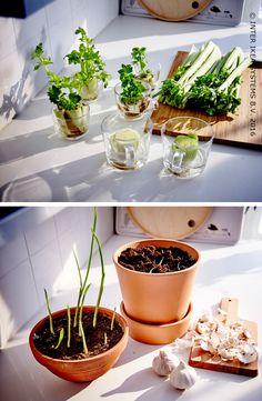 1000 images about jardiner en ville on pinterest for Nourriture chez ikea