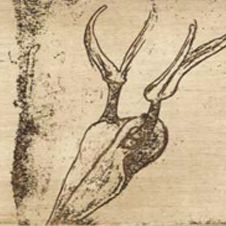 Tränen: Hirschschädel (Museum Edition) Museum, Joseph, Art, Deer Skulls, Artworks, Art Background, Kunst, Performing Arts, Museums