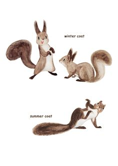 Eurasian Red Squirrel illust - Google 검색