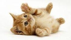Résultats de recherche d'images pour «animaux cute»