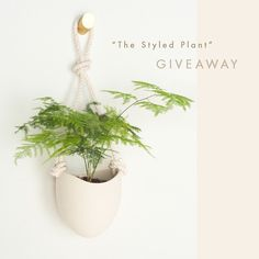 The Styled Plant Giveaway   XO Home   Styled Canvas