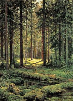 Coniferous Forest. Sunny Day, 1895 by Ivan Shishkin. Realism. landscape