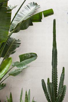 Lampe Textiles: one of Belgium's greatest textile companies Potted Plants, Cactus Plants, Textile Company, Showroom, Pots, Plant Leaves, Flora, Textiles, Space