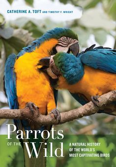Parrots of the Wild: A Natural History of the World's Most Captivating Birds, by Catherine A. Toft and Timothy F. Wright