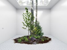 Temporary Gallery Space Frames Nature as Art | Anouk Vogel