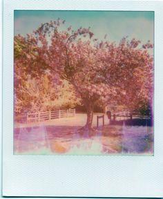 blossom edit 22.44.45.jpg