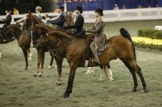World's Championship Horse Show at the Kentucky State Fair
