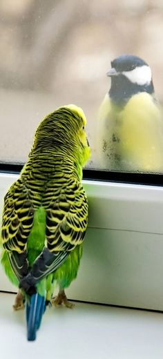 Birds --> A Lot of #BeauTy #PiCs and #Smart #TiPs. FolloW Please! https://www.pinterest.com/moycomp #parrottips
