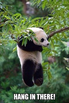 It's almost Friday!!! Yeah!❤️ Panda Lovers Paradise  Free Shipping Until July 31st!!  Like and Follow on FB! TAP➡️ https://go