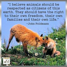 """I believe animals should be respected as citizens of this earth. They should have the right to their own freedom, their own families, and their own life."" - John Feldmann"