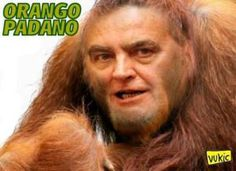 """Informazione Contro!: Se in Parlamento dire """"orango"""" non è considerato u..."""