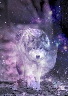 Galaxy And Wolf Image