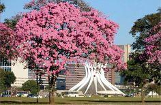 Brasília, Brazil