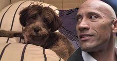 """El actor Dwayne """"La Roca"""" Johnson es conocido por su amor por los perros y lo demostrado donando 1.500 euros a un cachorro callejero que lleva su nombre y necesita ser operado para salvar su vida."""