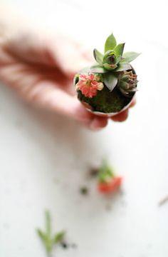 ideas con huevos para decorar las plantas!