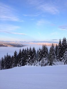 sweden norway hafjell snow winter skiing trees fir firtree spruce ski downhill hill scandiavia northern Let It Snow, Norway, Sweden, Skiing, Trees, God, Mountains, Winter, Nature