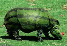 watermelon rhino! lol