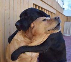 L'Assommoir                           Un abrazo de los mejores amigos.