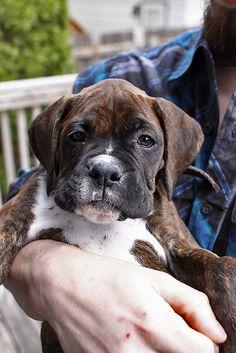 Baby #Boxer