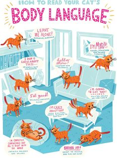 How to read your cat's body language! Click through to learn how to become a cat whisperer. Cat behavior can be tricky to interpret. I Love Cats, Crazy Cats, Cat Magazine, Cat Body, Cat Jokes, Cat Hacks, Cat Whisperer, Cat Care Tips, Pet Tips