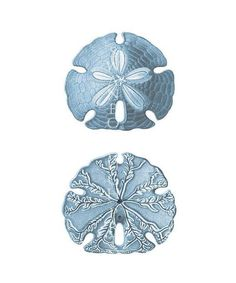 A fine art Blue Sand Dollar print, a crisp and detailed sealife print. Perfect for a grey or blue coastal beach theme bedroom decor. GOOD TO KNOW THINGS - about your print Your print comes from an original antique print or vintage lithograph Giclée Printed onto Museum Quality 100% #greycoastalbedrooms #coastalbedroomsblue