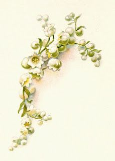 Antique Images: Free Flower Graphic: Vintage Lily of the Valley Illustration