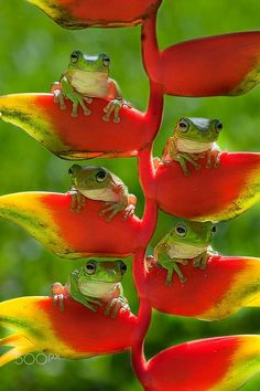 How cute are these little frogs?