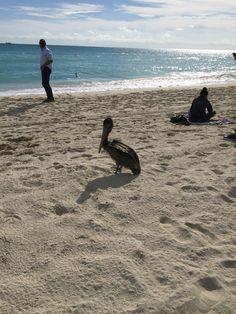 Miami 26 gennaio