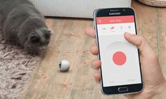 RollyCat tracks fitness and automatically plays with your cat even when you're not around. | Crowdfunding is a democratic way to support the fundraising needs of your community. Make a contribution today!