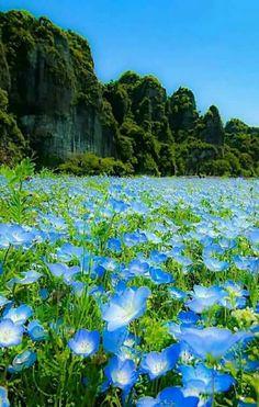 Precioso lugar! Un sueño estar allí,en ese paraíso de flores.