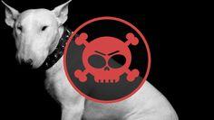 12 reasons, why bullterrier is a REALLY dangerous animal!!! | 12 indok, hogy miért életveszélyes bullterriert tartani!
